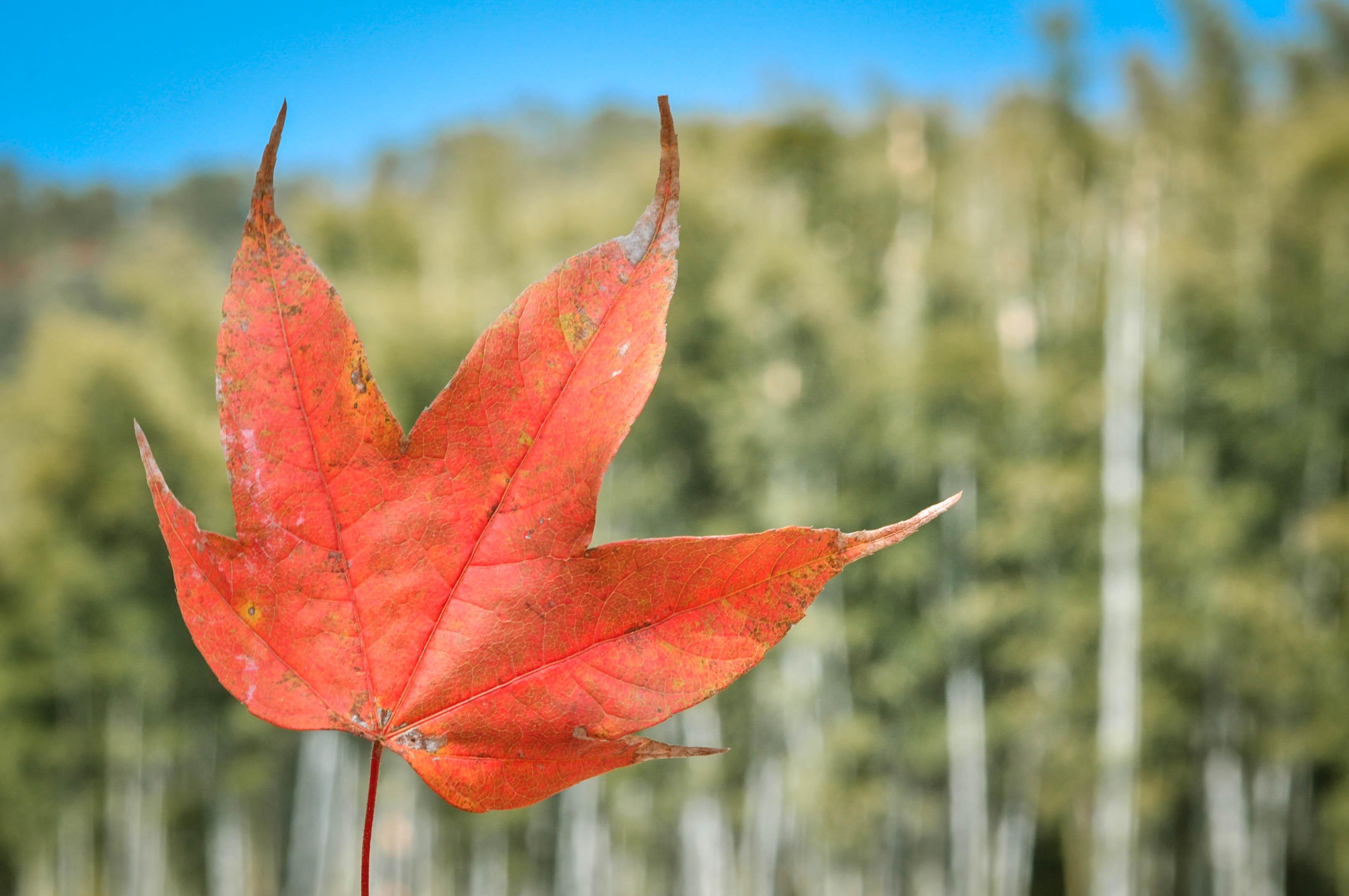 于抓住了秋天的美好.-云髻山的泉与枫 收获最美的秋天