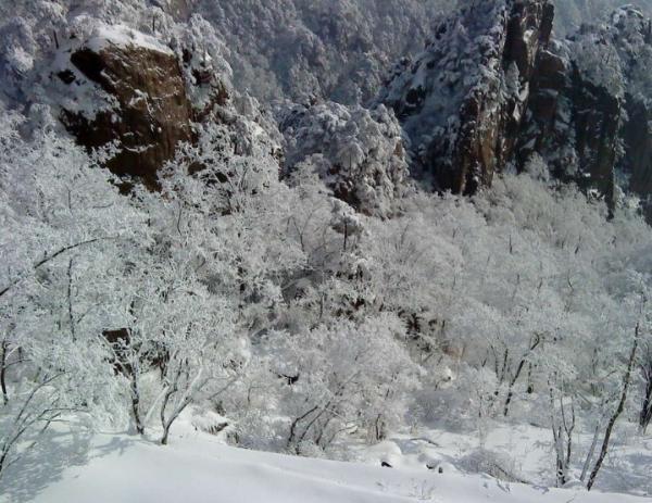 冬季黄山旅游 冬季黄山旅游攻略