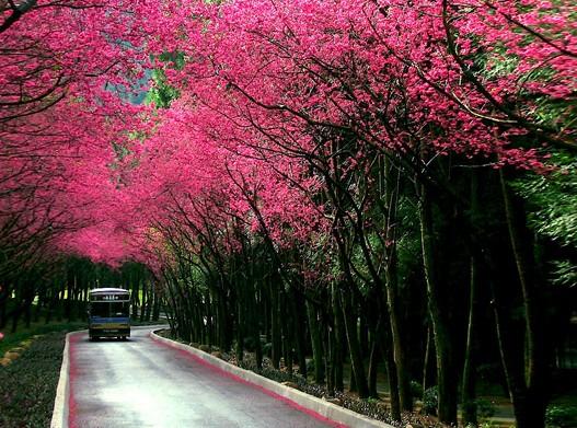 上海旅游景点门票大全