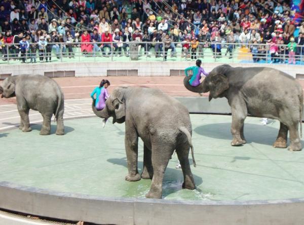 上海野生动物园旅游攻略-途家网旅游指南