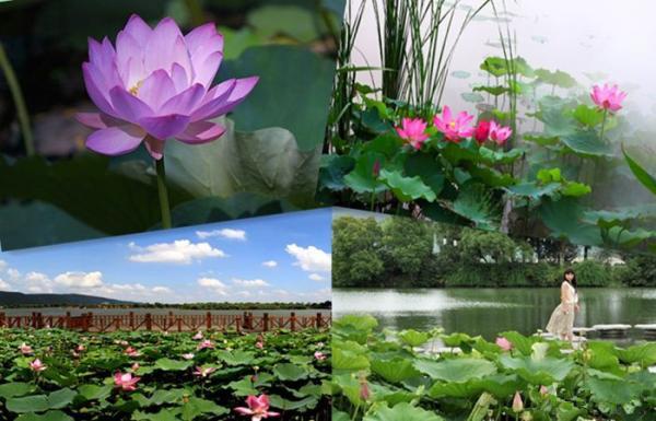 常熟市  标签: 旅游景点 风景区 旅游度假区 5a风景区  虞山尚湖旅游