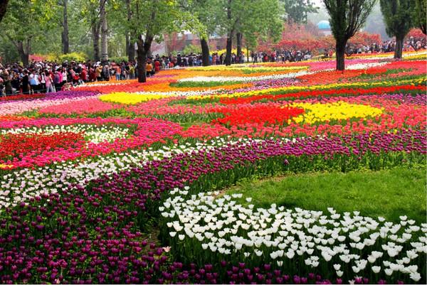 北京植物园景点介绍 北京植物园门票