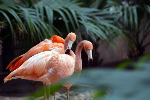 2013北京野生动物园旅游攻略 北京野生动物园自助游攻略