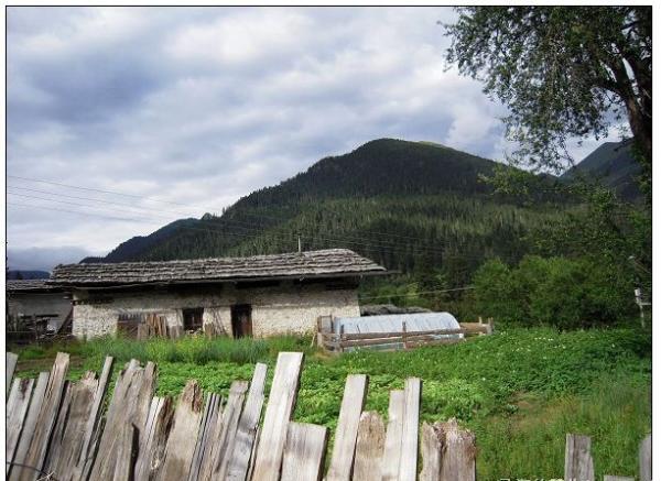 西藏林芝鲁朗旅游 2013林芝鲁朗旅游攻略图片