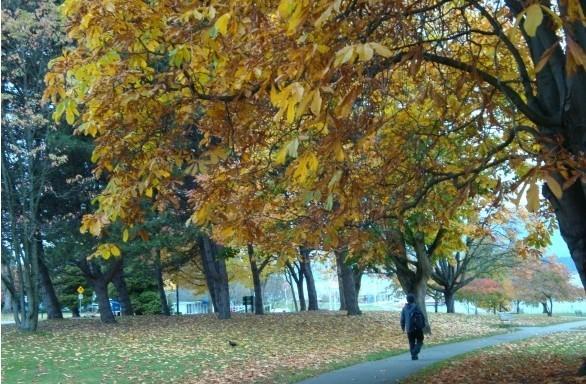 在窄窄的马路上空汇合的,是两旁对接着的梧桐树叶,它们洒下一地清凉.