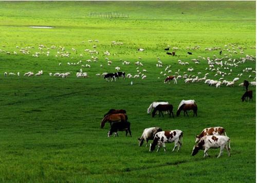 张家口旅游景点大全 张家口旅游景点介绍   张北坝上草原是有代表性的