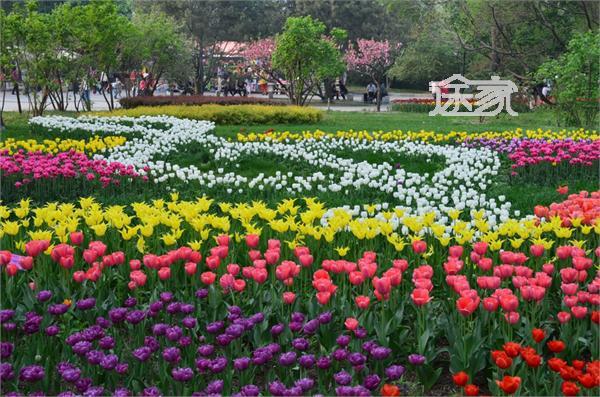 壁纸 成片种植 风景 花 植物 种植基地 桌面 600_397