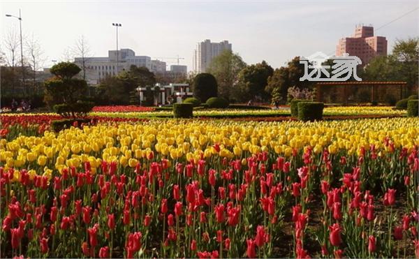2014上海春季花展有哪些 2014上海春季花展活动大全