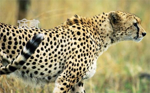 神农架还拥有着丰富的动植物资源,这里的森林覆盖面积广大,为动物的
