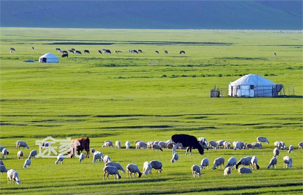 描写成语视频的鸡蛋内蒙古大做法草原草原汉堡风景美景图片
