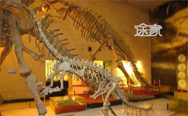 上海自然博物馆在哪儿