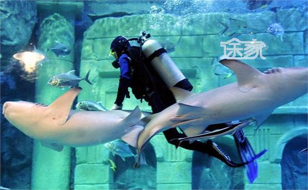 宁波海洋世界好玩吗 宁波海洋世界门票