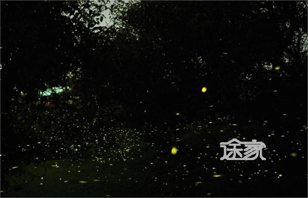 位于巴蜀四大古城之一的邛崃市天台山,这里是亚洲目前的最大的萤火虫