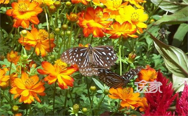 哥也玩蝴蝶风情谷