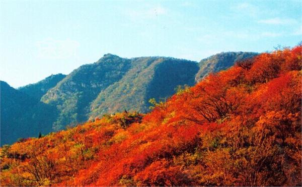 2014年香山红叶什么时候红 2014北京香山红叶节时间/门票图片