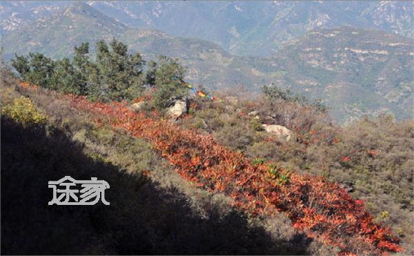 石家庄西山森林公园的美景 高清图片