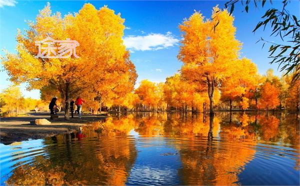 木垒胡杨林风光-新疆哪里有胡杨林 2014新疆胡杨林最佳观赏时间