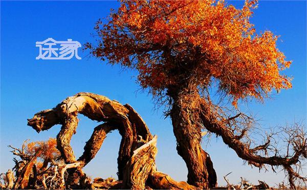 2014内蒙胡杨林旅游攻略