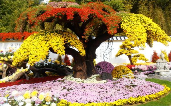 【上海菊花展】2014共青森林公园菊花展时间/地点/门票/观赏攻略