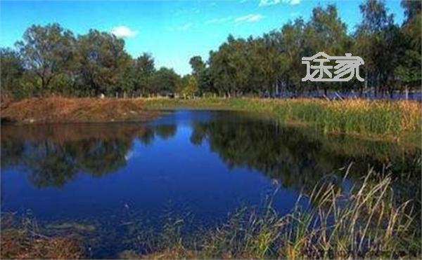 北京翠湖湿地公园怎么样 北京翠湖湿地公园地址