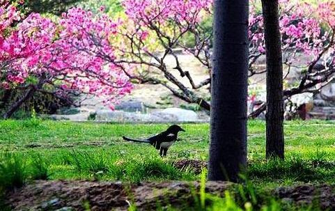 盘点北京6大玉兰花观赏地 芳菲满京城-途家社区