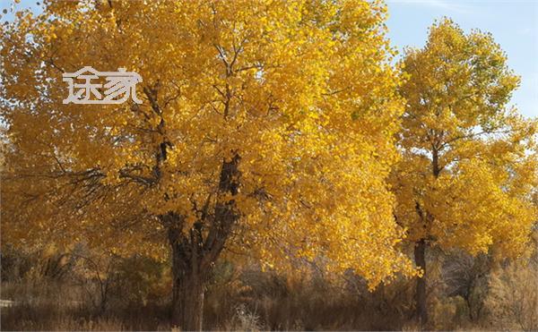 新疆哪里有胡杨林 2014新疆胡杨林最佳观赏时间